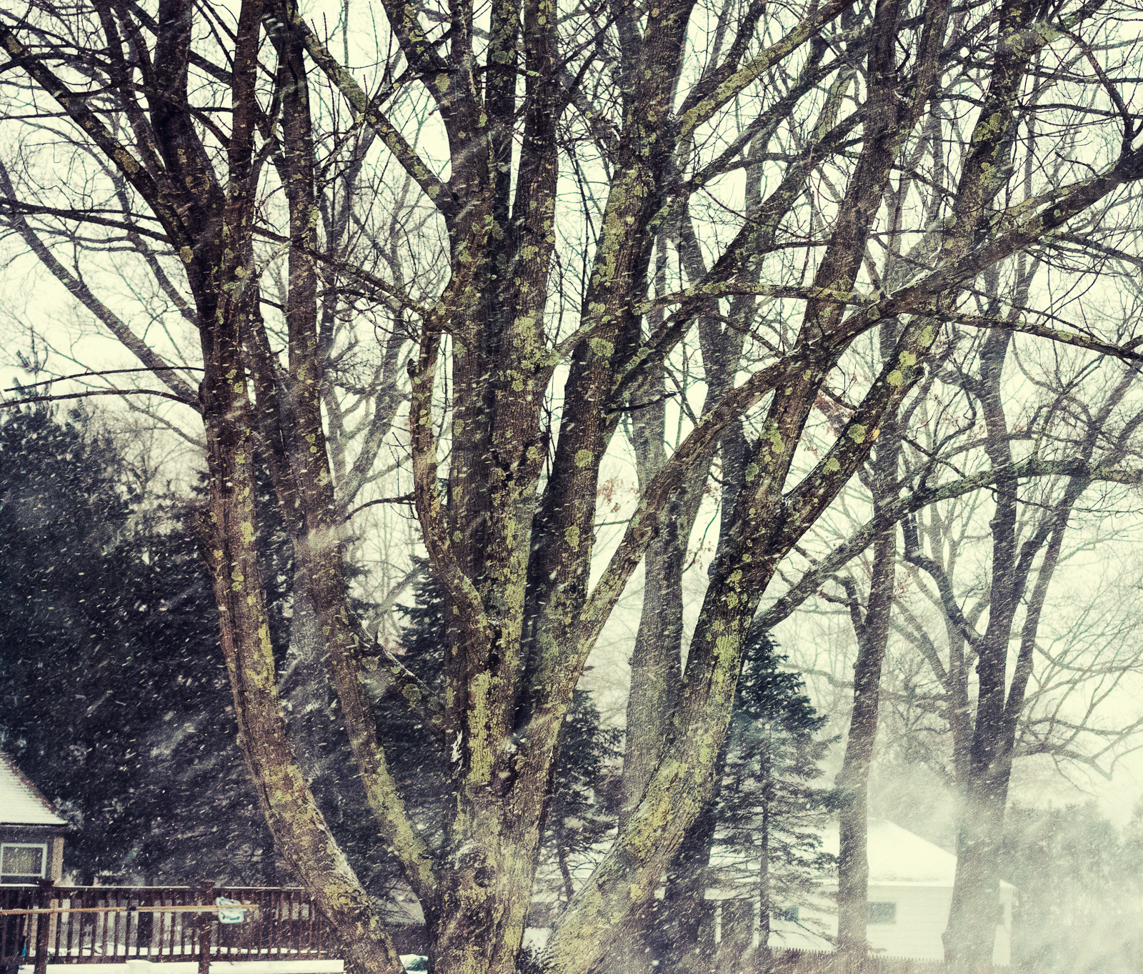 Snow falling against tree backdrop, cross-processed